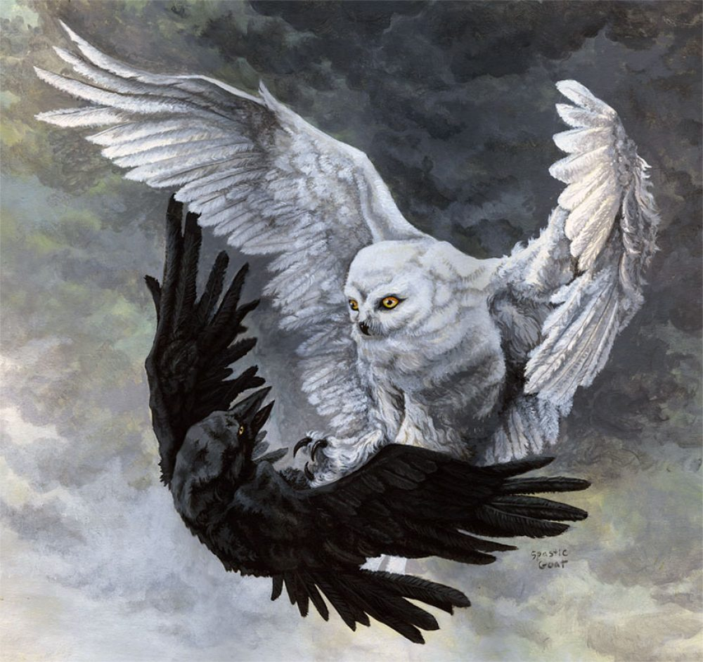 Painting of and Owl fighting a Raven in the clouds - yin yang painting by Rebecca Magar
