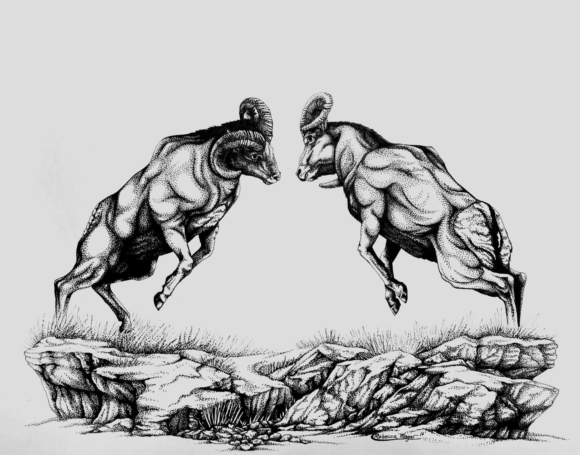 Bighorn Sheep Drawing By Rebecca Magar Wailing Wizard Blog
