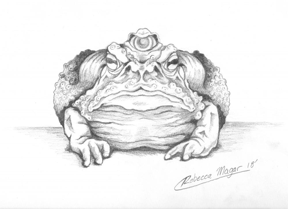 Dust Toad Concept Sketch for Book of Wyrms by Rebecca Magar